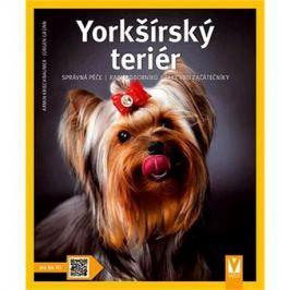 Yorkšírský teriér: správná péče rady odborníků také pro začátečníky