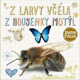 Z larvy včela Z housenky motýl: Životní cyklus