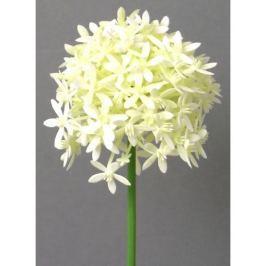 Umělá květina Česnek krémová, 64 cm