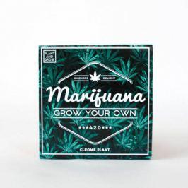 """Vypěstuj si vlastní """"Marihuanu"""""""