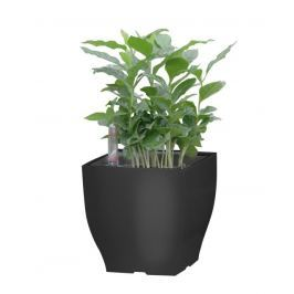 G21 Cube mini Samozavlažovací květináč černý 13.5cm
