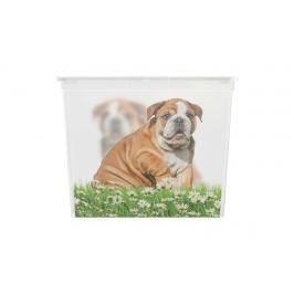 KIS Puppy and Kitten 57498 Plastový box - XL